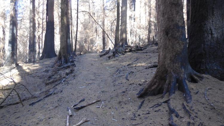 Monster Trail