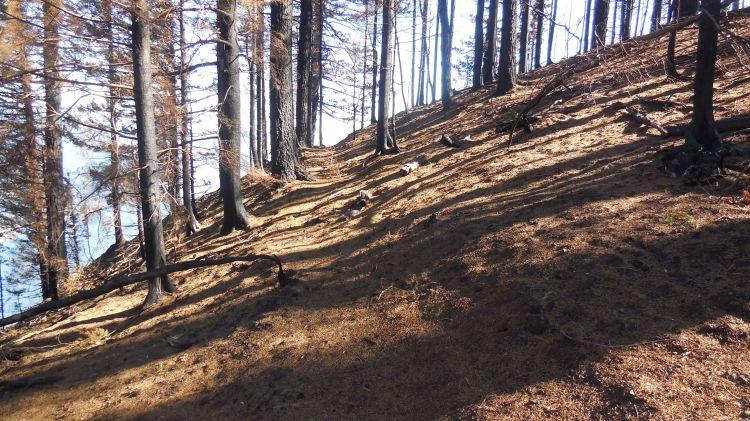 Viewpoint Trail